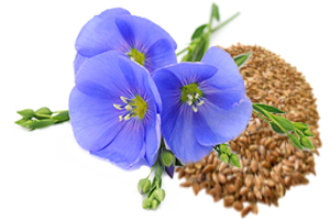 Эстера - экстракт льняного семени